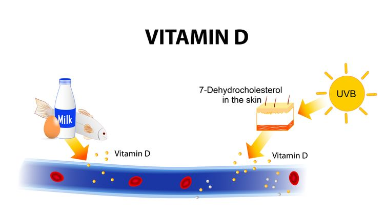 Most vitamin D is acquired from the sun or fortified foods